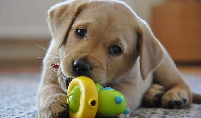 First-Time Doggy Daycare: 3 Tips for Pet and Owner Preparation